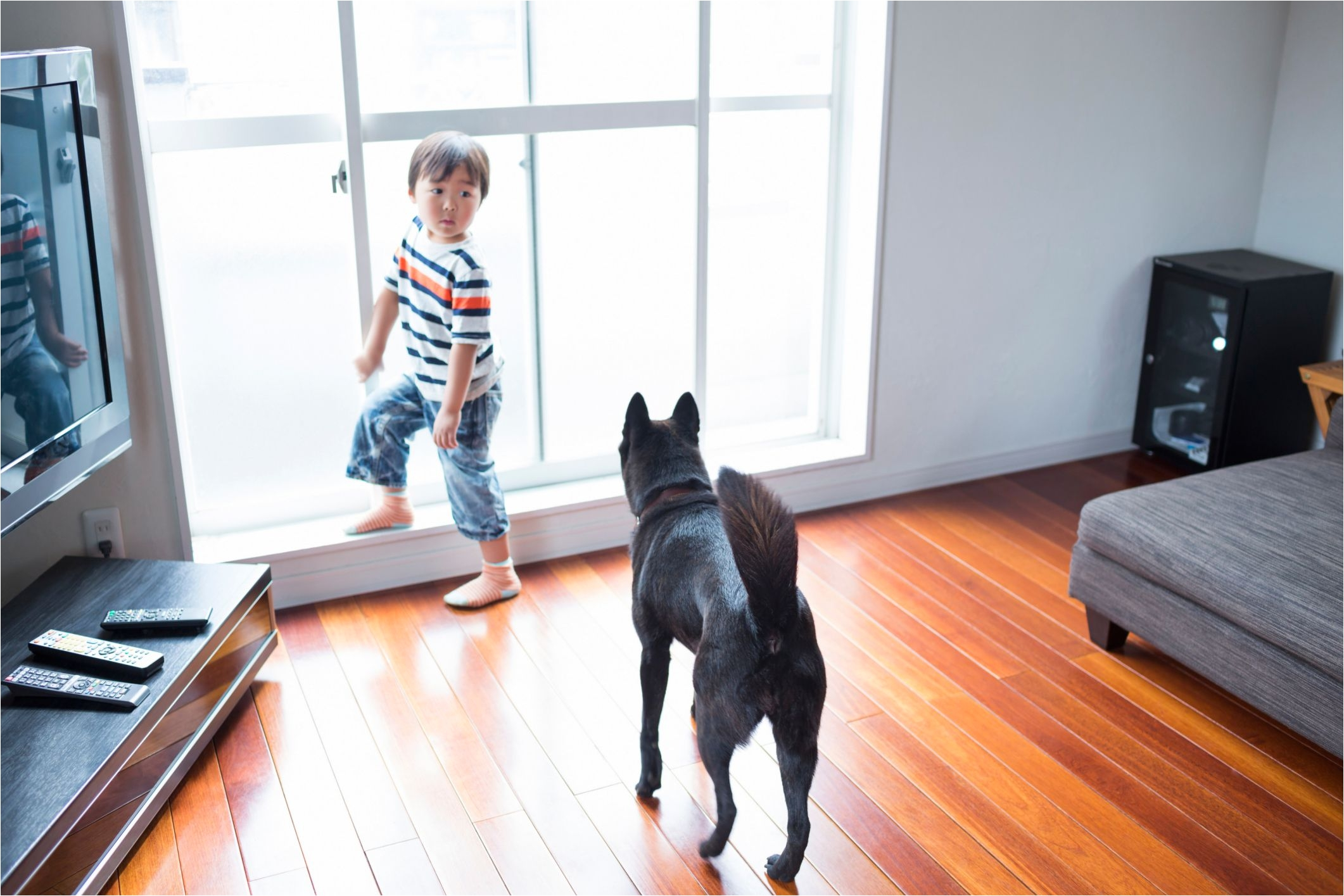 dog on wooden floor 465892145 56a4a1705f9b58b7d0d7e64e jpg