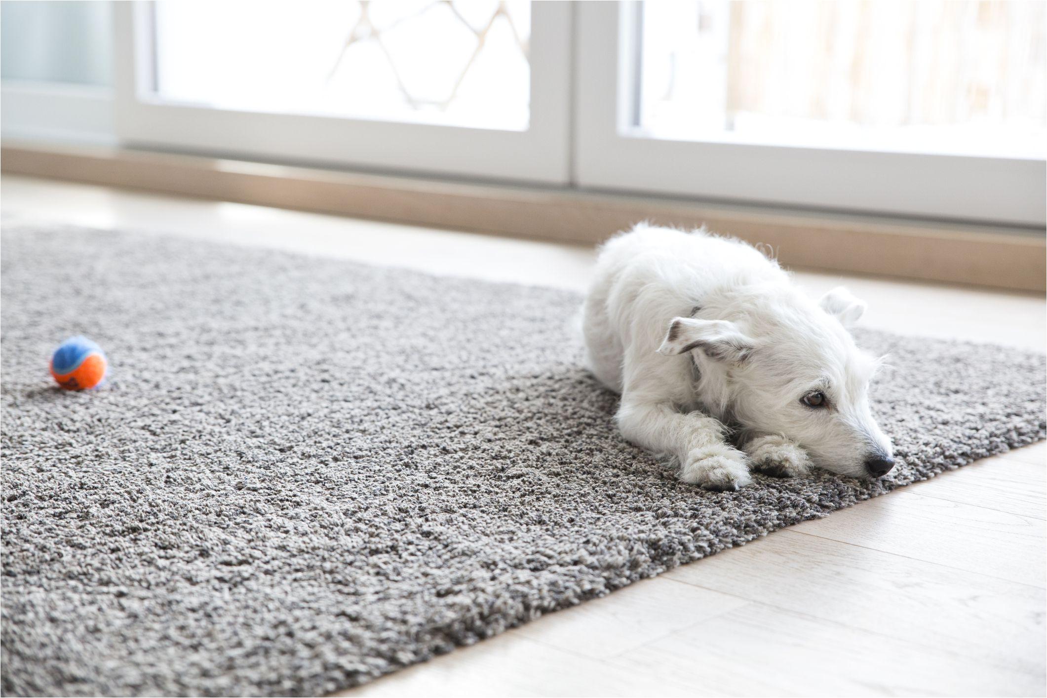 1516226852 how to clean carpet jpg