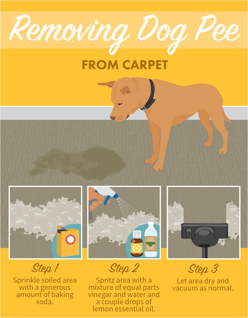 it happens to us dixie parents even to the most well trained removing dog pee from carpets stain removal