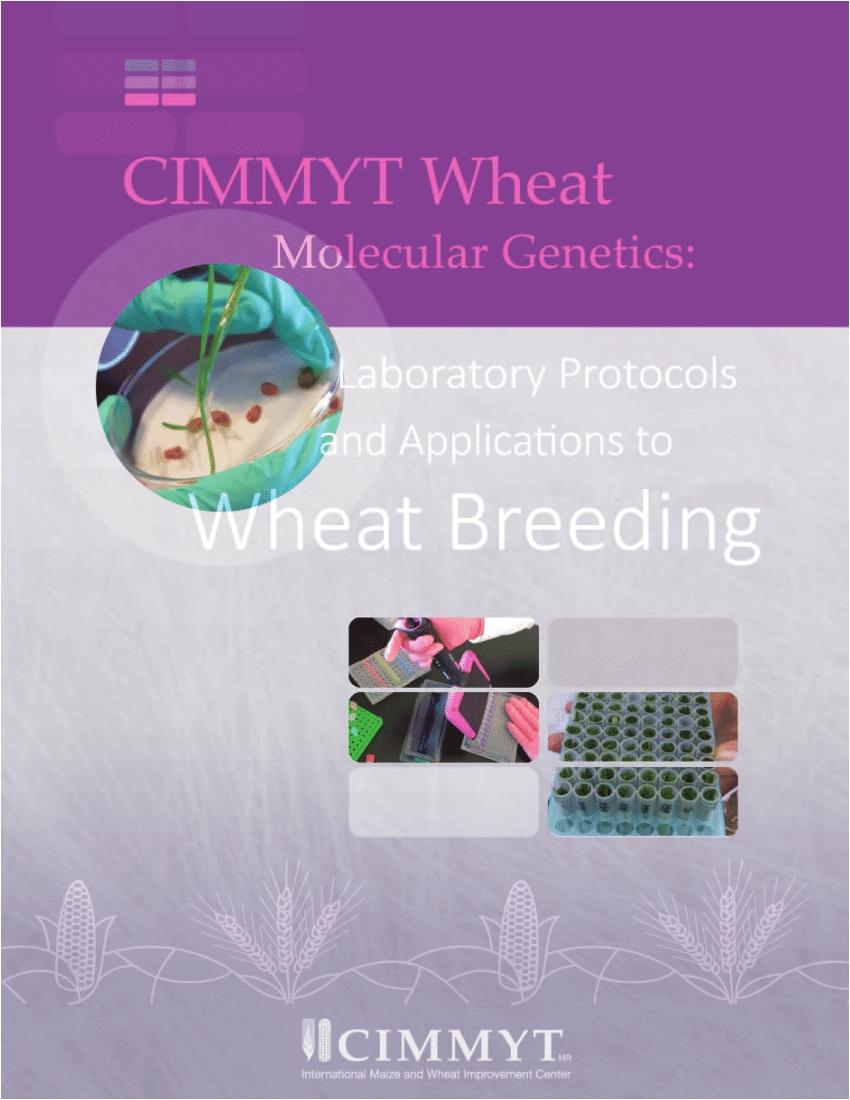 pdf cimmyt wheat molecular genetics
