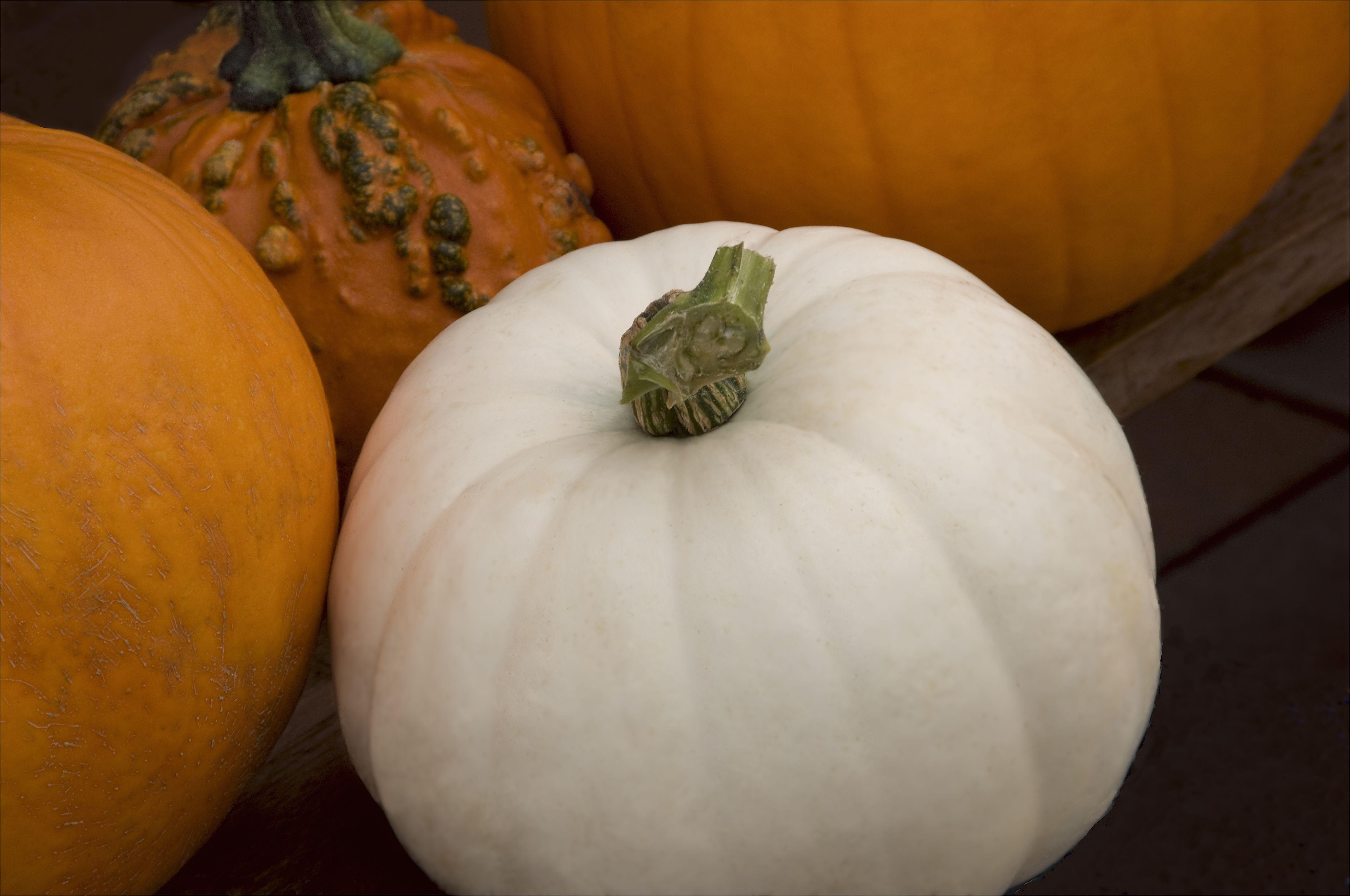 pumpkins 134432498 58fe97733df78ca1594a85a0 jpg