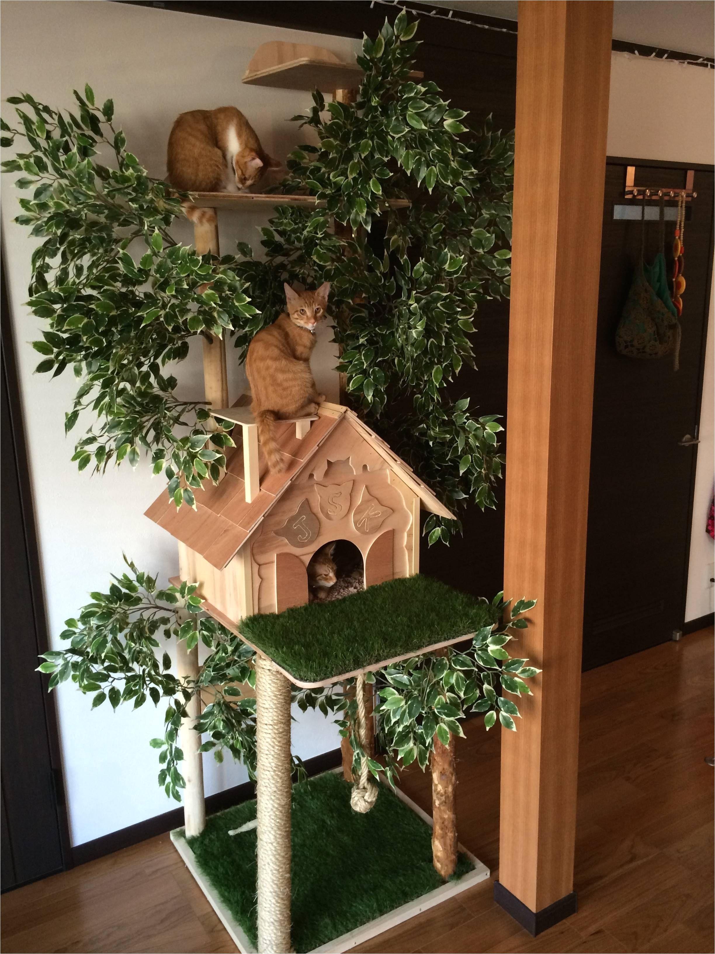 od about gebrichmond cat house plans cat house design diy luxury cat house plans custom house plans best