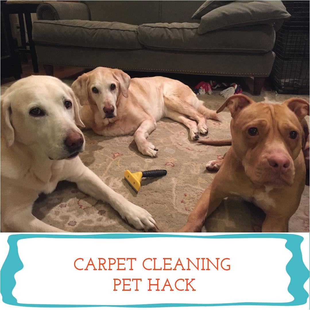 furminator long hair deshedding tool for dogs large