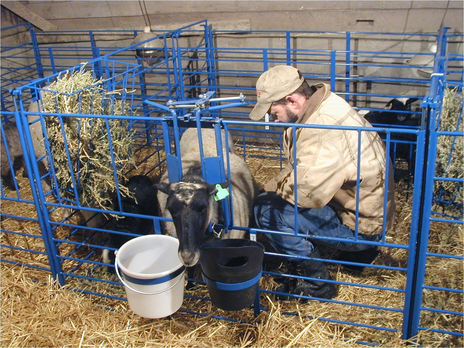 sydell lambing kidding pens three willows ranch supply sheep goat