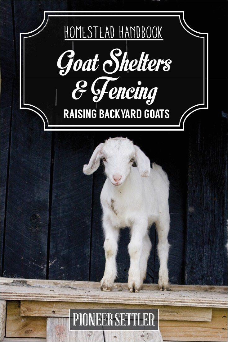 hh raising backyard goats chapter2