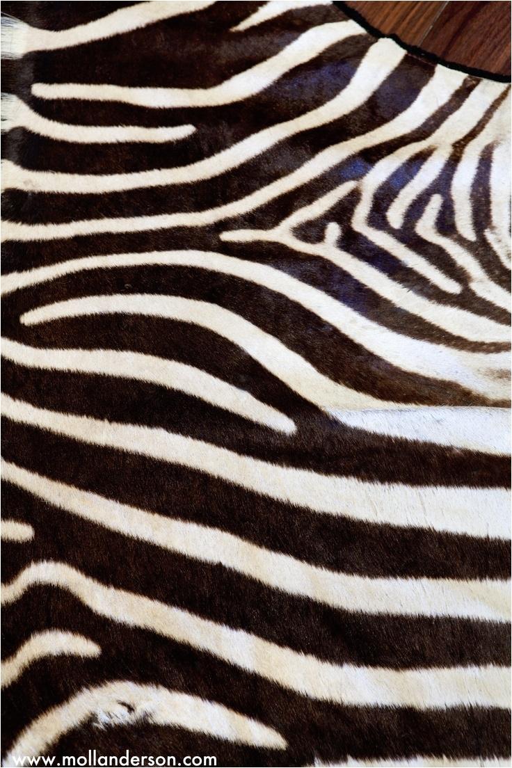 zebra rug for alexis office