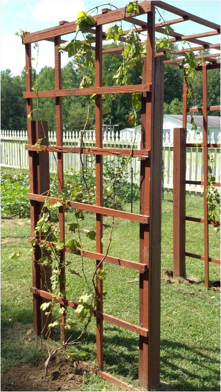 grape vine trellis design inspirational garden fence grapevine trellis