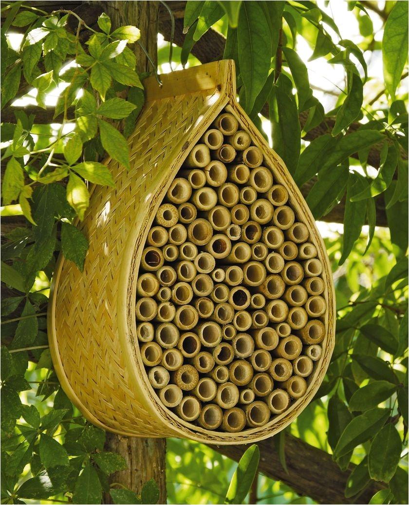 mason bee house mason bees gardener s supply
