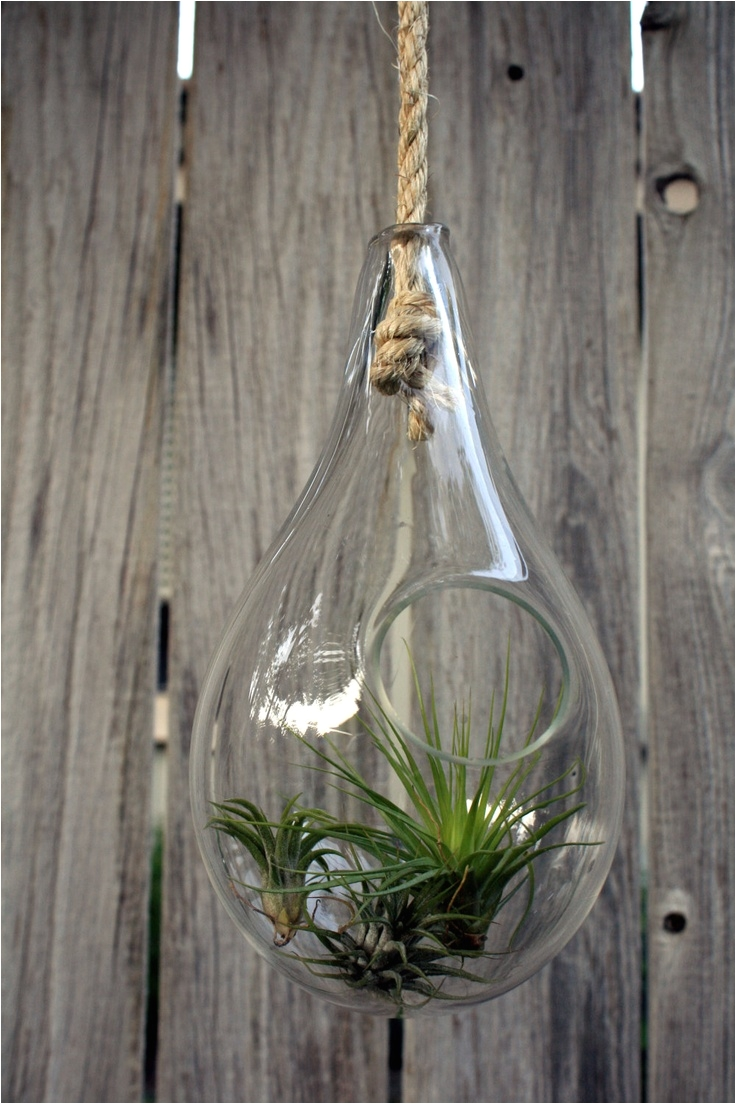 hand blown glass terrarium