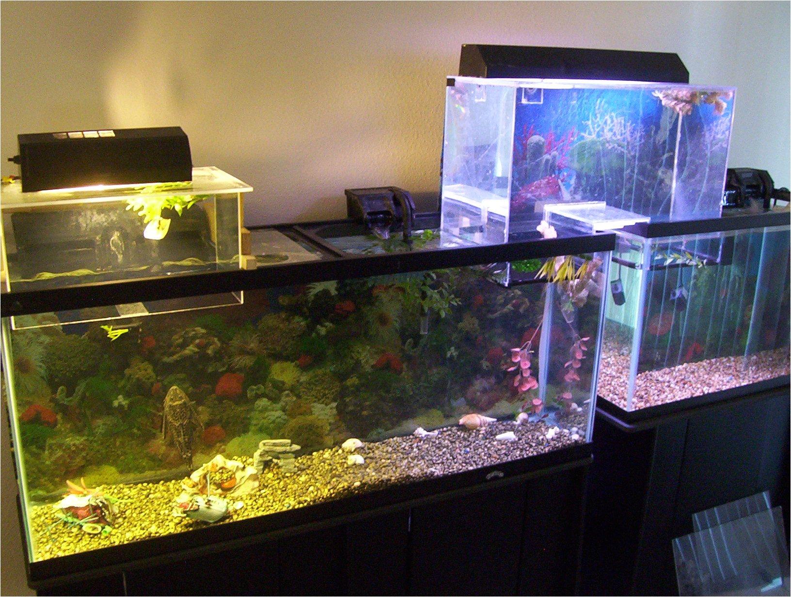 Star Wars Fish Tank Decor Understanding Upside Down
