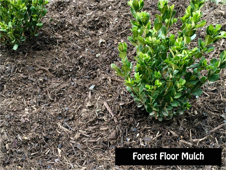 Aguinaga forest Floor Mulch Ground Covers Mulch