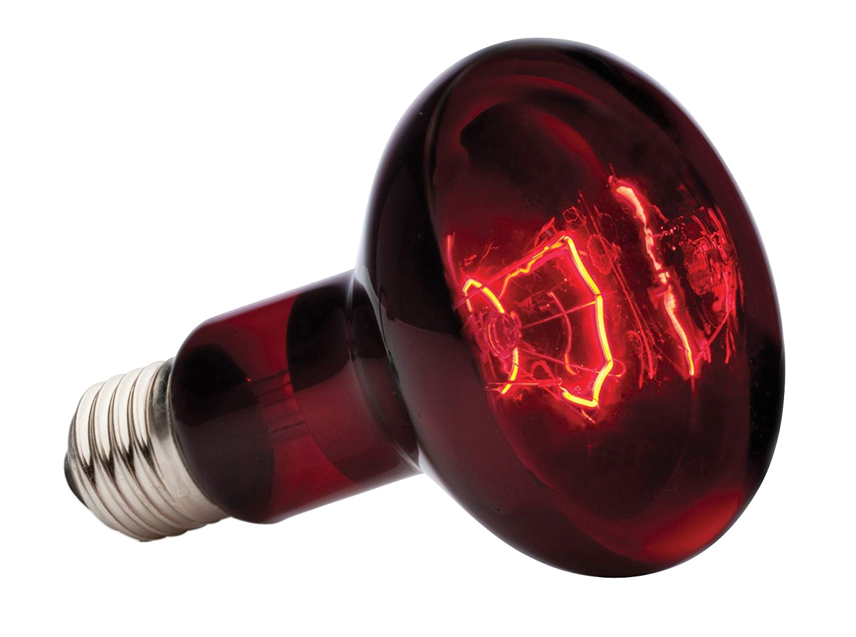 amazon com exo terra heat glo infrared spot lamp 100 watt 120 volt pet habitat heat lamps pet supplies