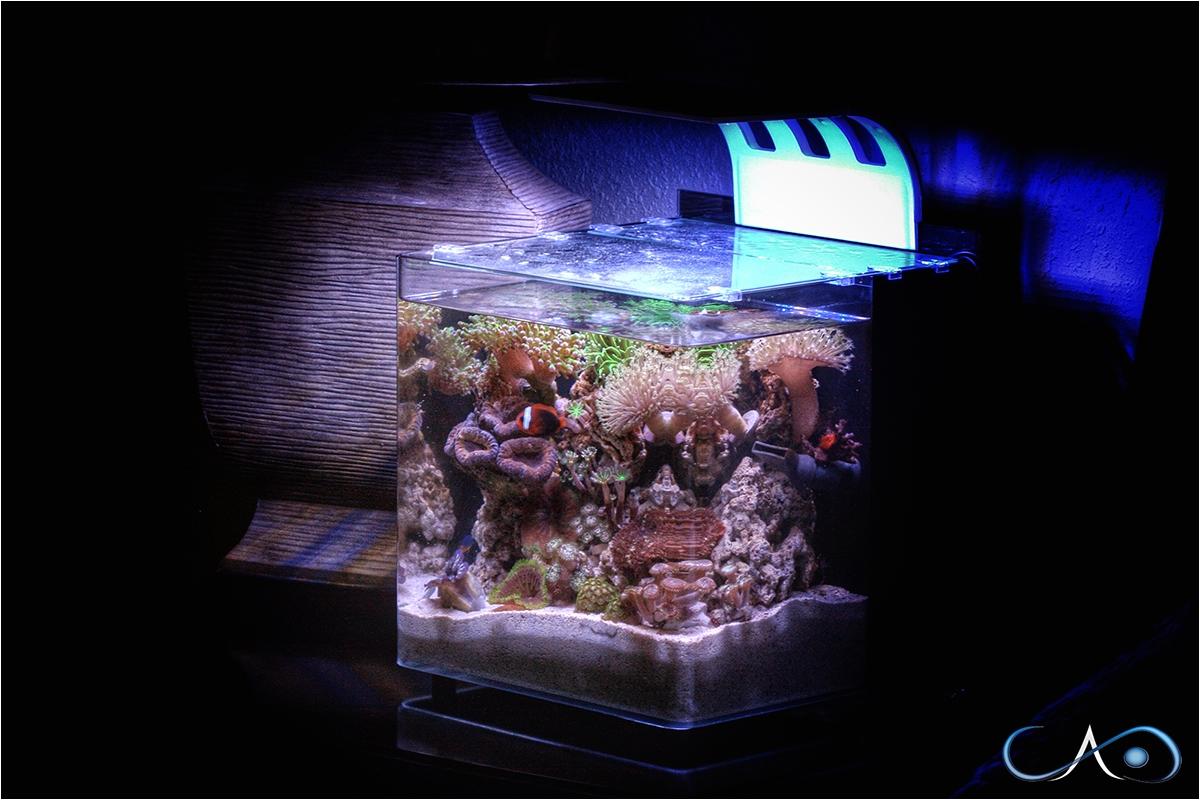 Cad Lights Aquarium 4g Mini Series 1804 M 125 00 Cadlights Think Outside the Cube