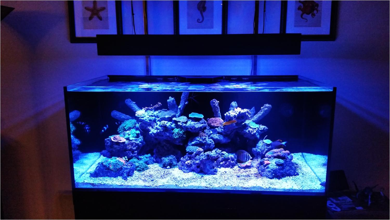 cad lights 100 gallon artisan ii aquarium w o protein skimmer black stand marine depot