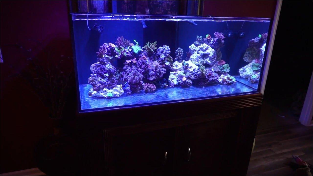 cad lights artesian ii 100 gallon reef tank short video