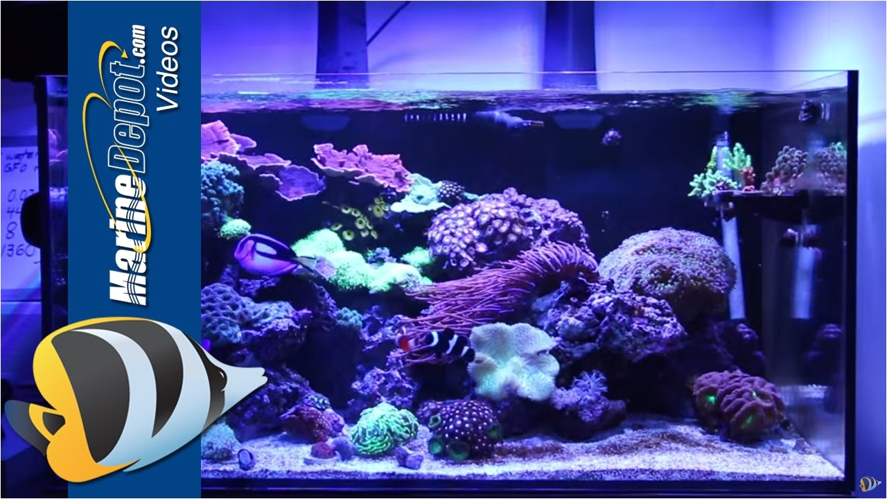 marine depot featured tank cad lights artisan 70 gallon reef tank youtube