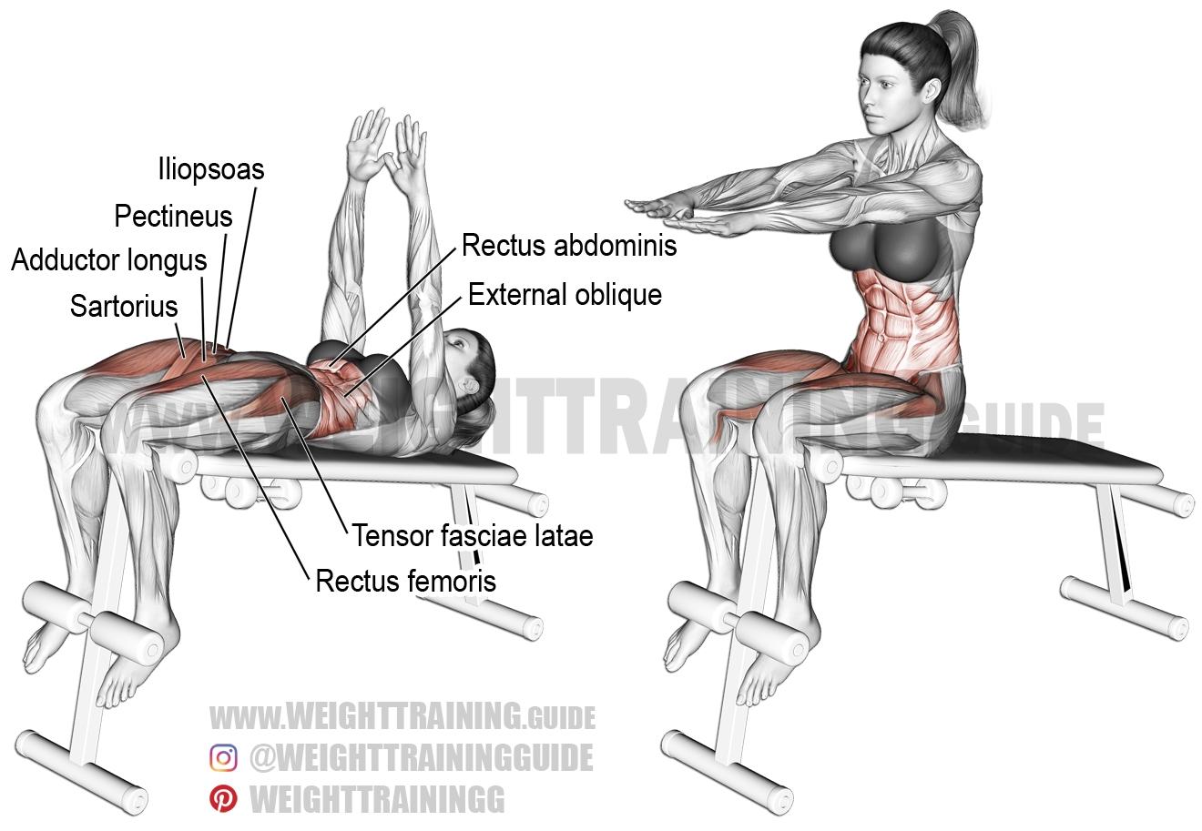 decline sit up a compound exercise target muscle rectus abdominis synergists obliques iliopsoas tensor fasciae latae rectus femoris pectineus