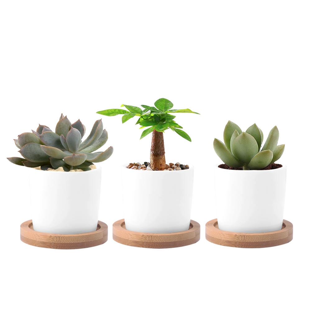 wituse white column flower pot ceramic succulent plant pot decorative desktop fern plants clay garden pot with plant pot tray