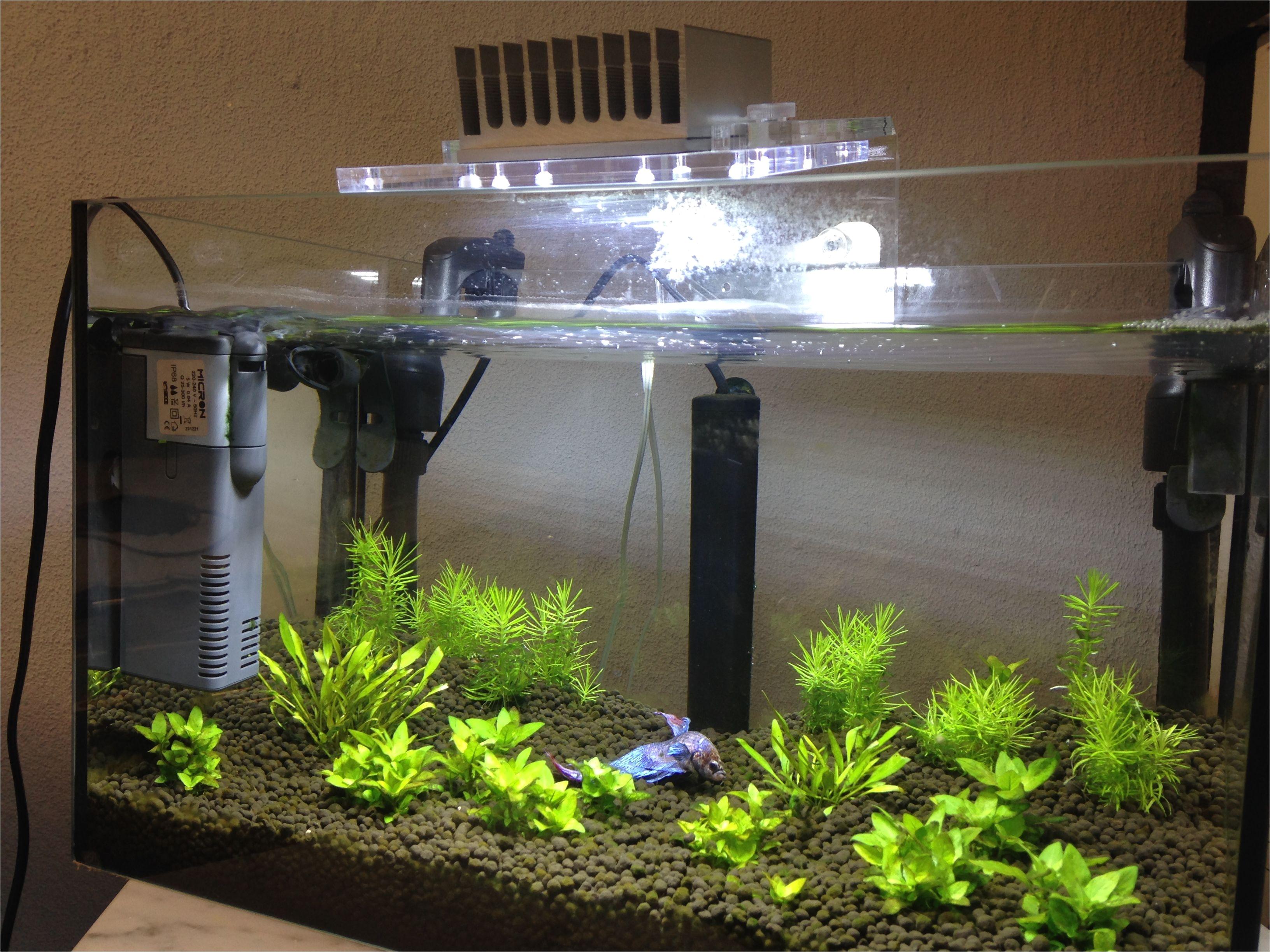 betta fish with minu led light micron internal filter and jolly plastic nano heater