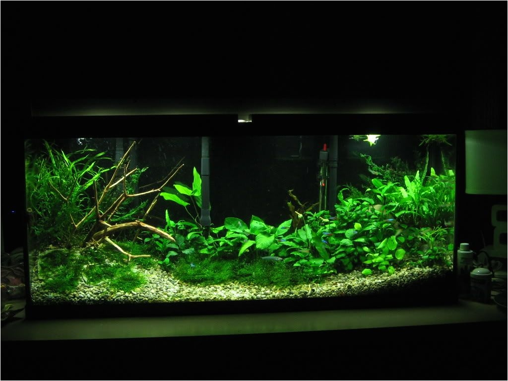 low tech tank show and tell low tech can be lush too