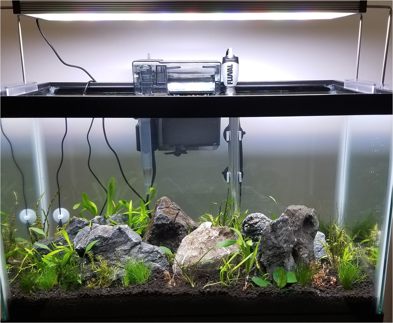 when my lights turn on in the morning i want my fish to feel like this is happening