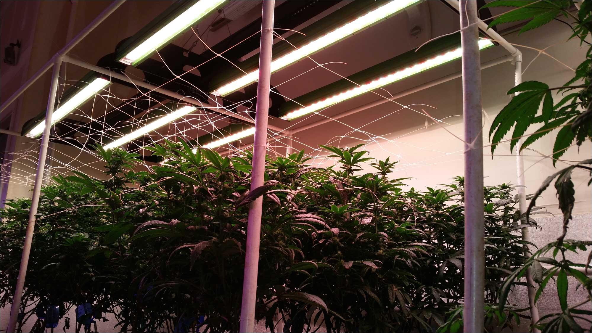 bios for cannabis growers