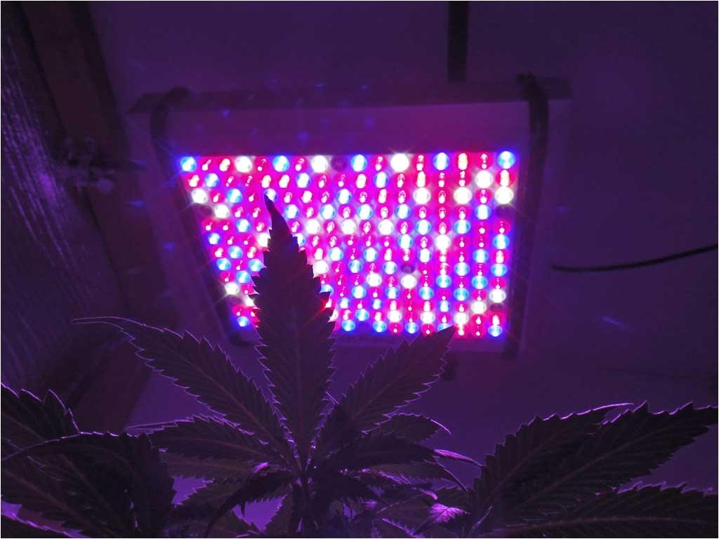 pro grow 400x