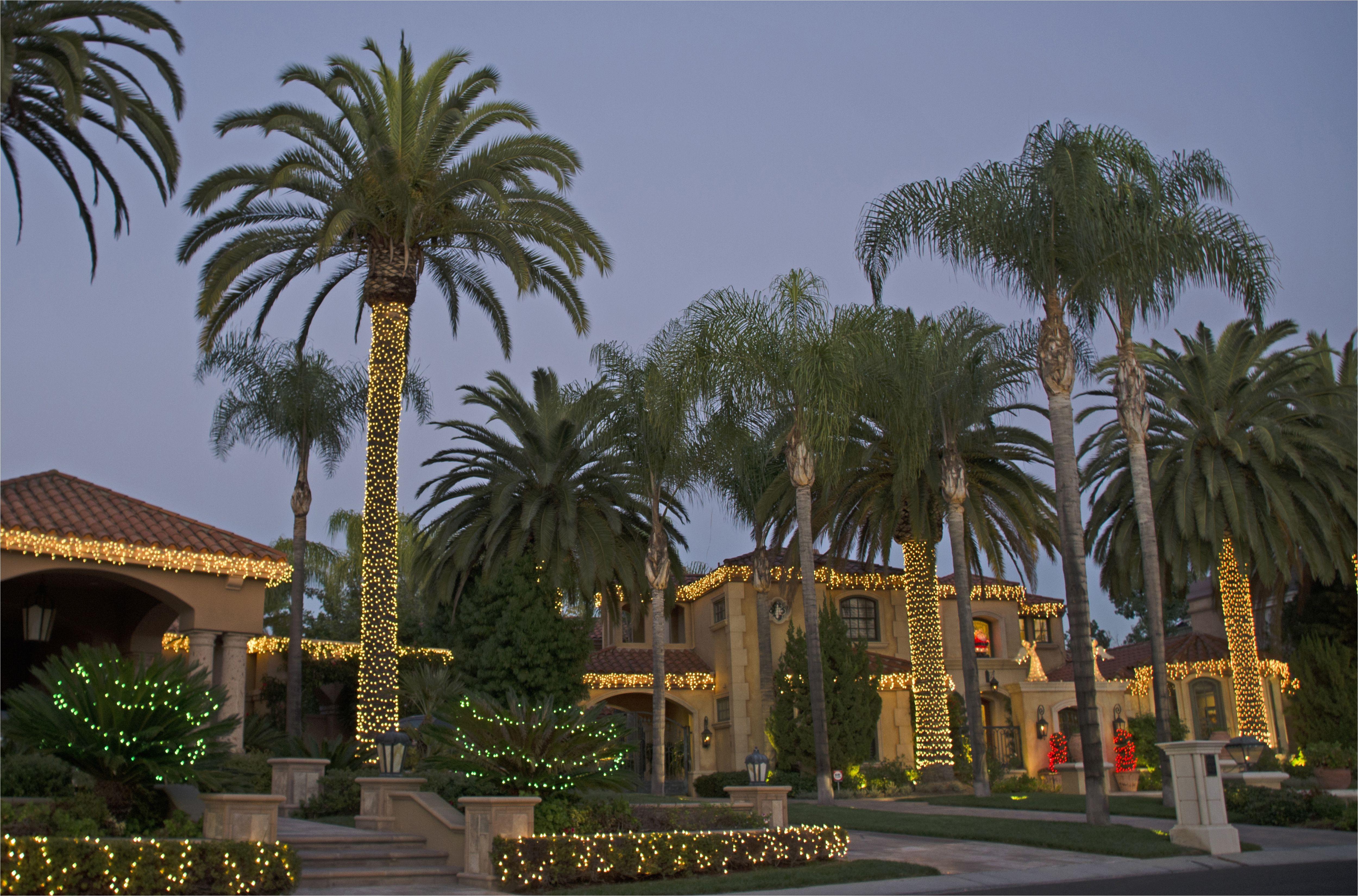 lit palm trees big 57e422285f9b586c359a45f3