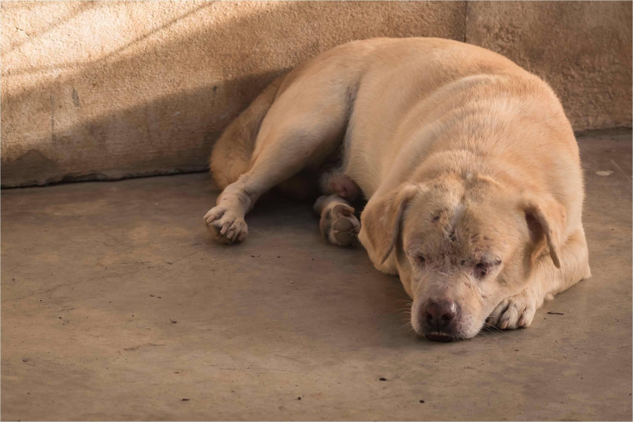 skin rash in dogs