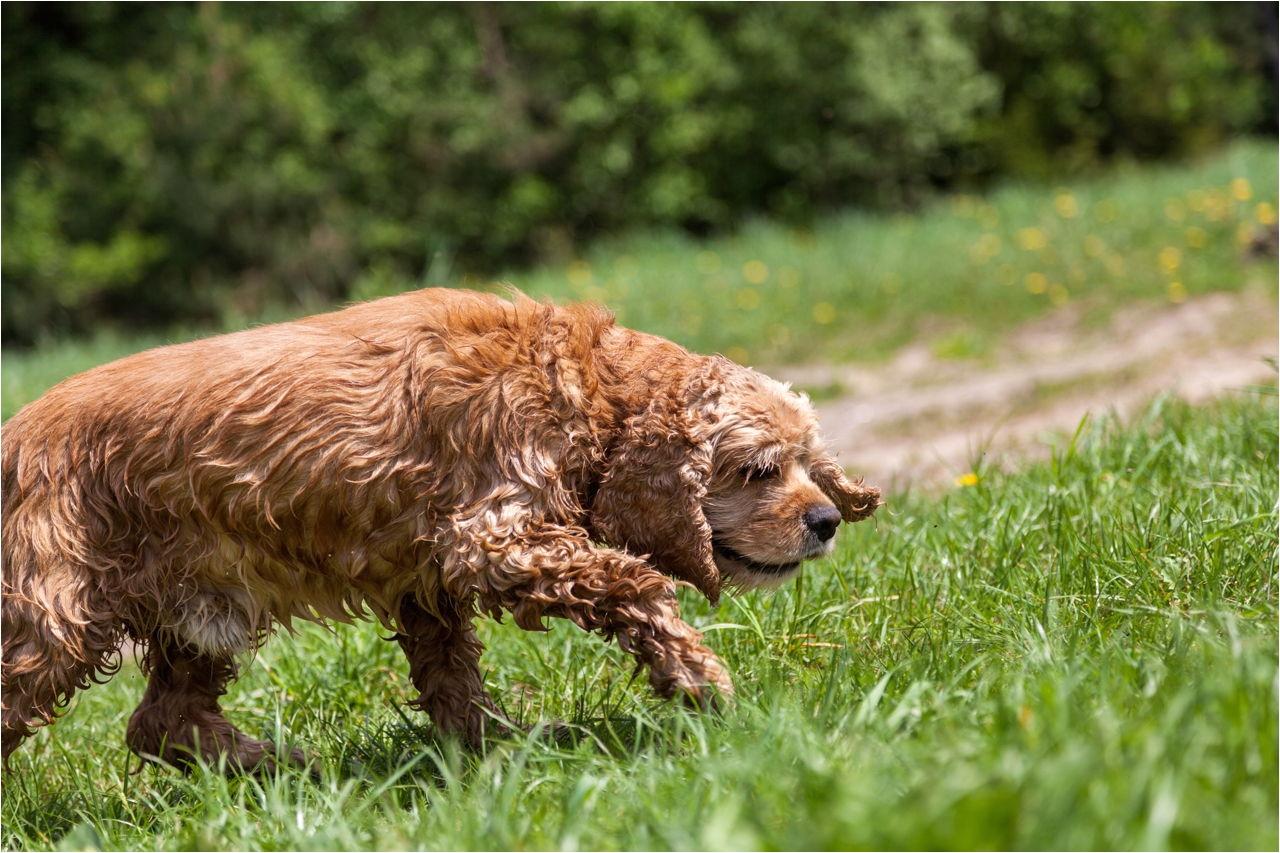 dog picks up the trail