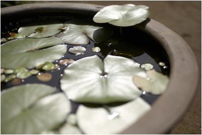 make tabletop water garden