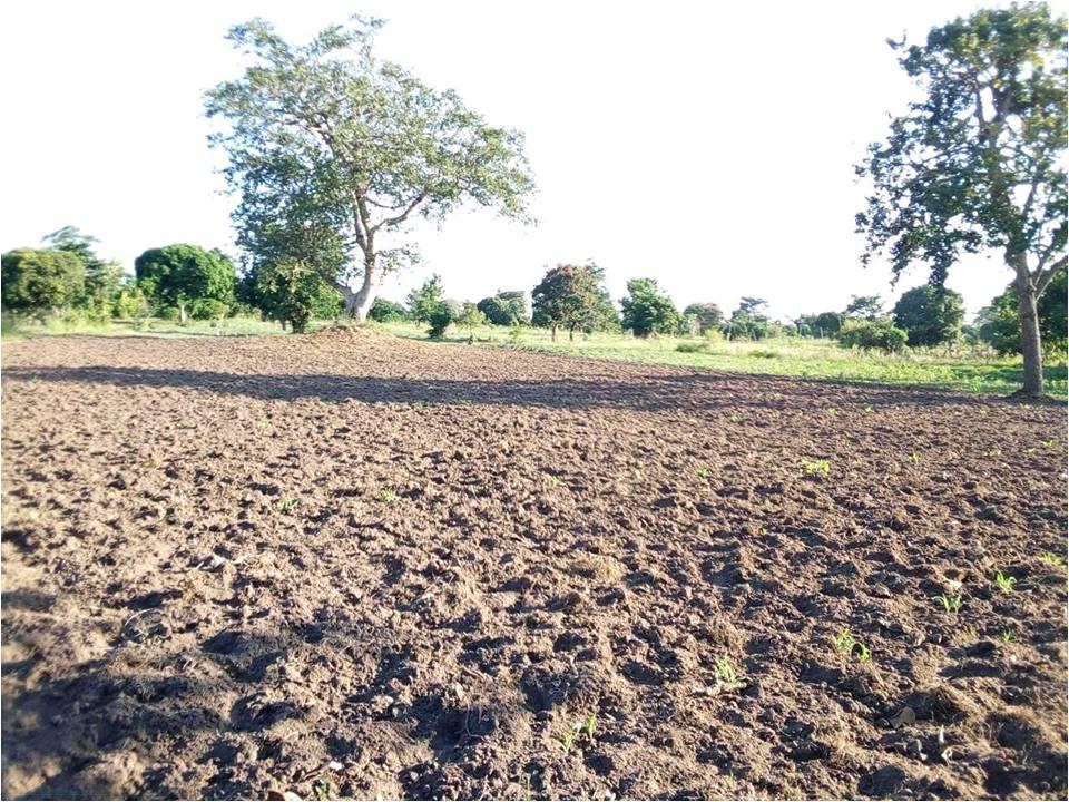 Bathtubs for Sale In Uganda 20 Acre Land for Sale In Namungalwe Iganda