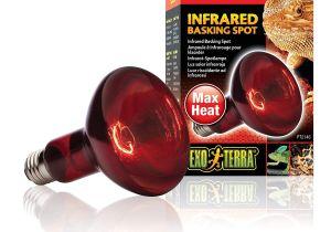 Alternative to Heat Lamp for Chickens Amazon Com Exo Terra Heat Glo Infrared Spot Lamp 150 Watt 120