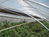 Automated Light Deprivation Greenhouse Auto Light Dep Greenhouse Humboldt Light Dep