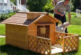 Backyard Dog Kennels Backyard Dog Kennel Pretty Backyard Dog Kennel Pictures