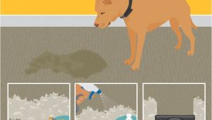 Best area Rugs for Dogs that Pee Best Stain Removal Tricks for Your Clothes Furniture and Floors