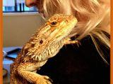 Best Bearded Dragon Flooring Bearded Dragons Love to Cuddle Dragon Pinterest Bearded Dragon