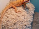 Best Bearded Dragon Flooring Www Ksmsdragonlandings Com Custom Made Bearded Dragon Hammocks