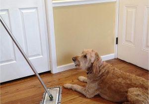 Best Floor Rugs for Dogs Amazon Com 20 Microfiber Pet Hair Mop by Cedar Creek Easily Cleans
