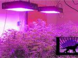 Best Grow Lights for Cannabis Led Light Design Amazing Commercial Led Grow Lights Commercial Led