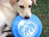 Best Rugs for Dogs Uk 18 Best Pirate Pet Contest Images On Pinterest Pet Breeds