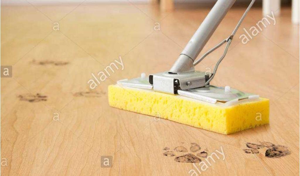 Best Type Of Mop To Clean Hardwood Floors 15 Charmant Microfiber
