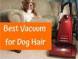 Best Vacuum for Hard Floors and Dog Hair Best Vacuum for Dog Hair In 2017 Guide & Reviews Us Bones