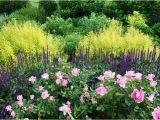 Borders Hardwood Flooring Colorado Springs Spirea Salvia and Roses Pink Purple and Lime Green