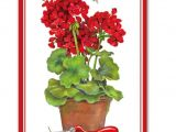 Breeze Art Garden Flags Breezeart Standard Flag Garden Geraniums Premium 28 X40 Display