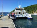 Bud Light Cruise Seafood Odyssea Cruise Do Marlborough sounds Picton