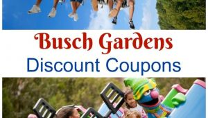 Busch Gardens Specials Find All Your Busch Gardens Discount Coupons Williamsburg and Tampa