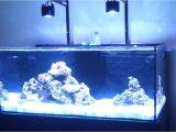 Cad Lights Aquarium 100 Gallon Cad Lights Aquarium Setup Part 1 Youtube