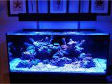 Cad Lights Aquarium Cad Lights 100 Gallon Artisan Ii Aquarium W O Protein Skimmer