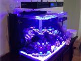 Cad Lights Aquarium Cad Lights Pls 50 Nano Pipeless Skimmer Equipment forum Nano